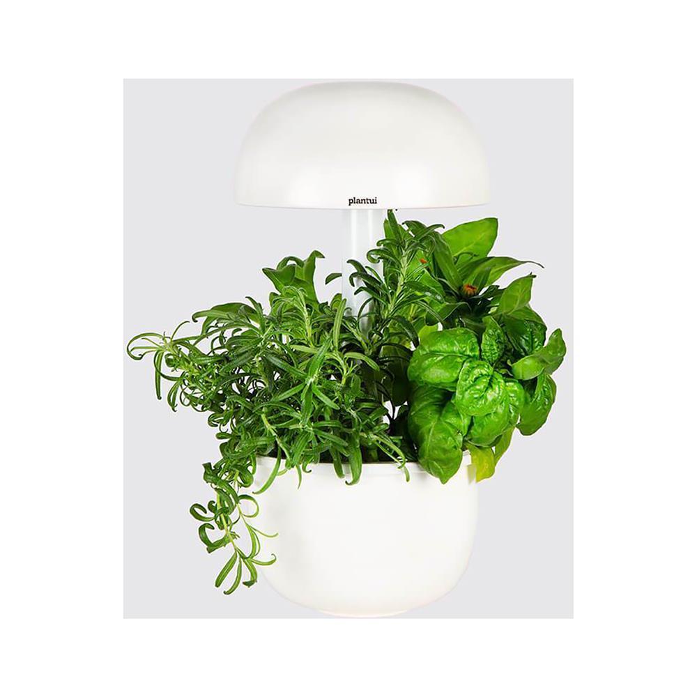 Plantui Pametni vrt 3e Smart Garden in kapsule s semeni mete