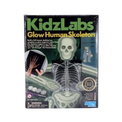 4M Raziskovalni set Človeški skelet
